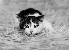 I Seeeee You :)