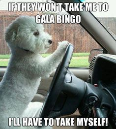 1000 Images About Bingo Quotes Amp Funnies On Pinterest