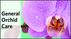 general-orchid-care
