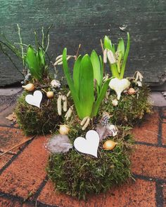 Frühlingsdeko~ Frühling ~ Spring magic with beautiful hyacinth in a moss ball ~ The hyacinth shines in its magical yellow and brings the spring mood with it. Estilo Country, Modern Flower Arrangements, Moss Garden, Deco Floral, Garden Care, Wooden Decor, Flower Boxes, Planting Succulents, Spring Flowers