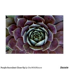 Close Up Poster, Spiky Succulent, Purple Succulents, Hens And Chicks, Personalized Door Mats, Custom Posters, Custom Framing, House Plants, Unisex