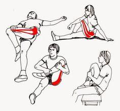 Bienvenido: Flexibilidad y elasticidad muscular                              …