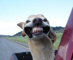 [F]風で犬の顔すごいことになってます。