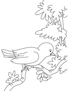Sparrow Is Looking For Food Coloring Page