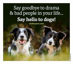 Say goodbye to drama & bad people in your life. . . say hello to dogs!