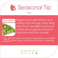 #Seasonal #FoodTips Time for some Fava Beans! - - Find more seasonal produce on ecogreenlove.com - - #April #food #cooking #abril #seasonal #kitchentip #foodtip