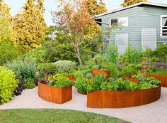 the curves on this raised garden. I would put a bench in the middle so we could sit and have a rest and admire our veggies, a glass of wine. Amazing Gardens, Beautiful Gardens, Raised Garden Bed Plans, Raised Beds, Rusty Garden, Backyard Ideas For Small Yards, Modern Landscaping, Yard Landscaping, Landscaping Ideas