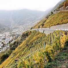 The vineyards above Martigny (Swiss-French border) are so steep that one would have problem to keep balance and yet are people able to cultivate the vines in spite of these hard conditions. #autumn #vineyard #switzerland #wanderlust #nature #lavieestbelle #travel #tasteintravel #takemethere #roadtrip
