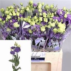 Lisianthus (Eustoma) Alissa Blue is actually a beautiful purple flower that adds height and shape to arrangements. 2018 Wedding Trend: Ultra Violet Purple. For lilac and purple wedding flowers to suit your colour scheme, visit our website at www.trianglenursery.co.uk/fresh-flowers!
