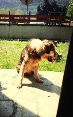 Questo è il mio cagnolino Pinky... È vecchietto, ha 18 anni e mezzo!   https://www.facebook.com/photo.php?fbid=200129406829959&set=pb.171036026405964.-2207520000.1379083159.&type=3&theater