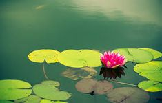 Escuela de Reiki en Barcelona - Maestros de Reiki - Formamos Terapeutas- Barcelona, Reiki, Taj Mahal, Yoga, Plants, Painting, Master's Degree, Pictures Of Flowers, Therapy