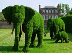 Elephant Topiaries