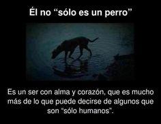 No compres uno de raza, adopta uno sin casa. Descubre los beneficios e tener un perro aquí... http://www.1001consejos.com/beneficios-de-tener-una-mascota/