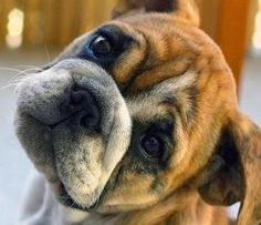 Veterinary Network Asking for Reports of Illness Associated with Recalled Jerky Treats