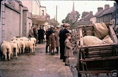 Rural Ireland in the Ireland Pictures, Images Of Ireland, Old Pictures, Old Photos, Vintage Photos, Irish Famine, Irish People, Irish Culture, Irish Celtic