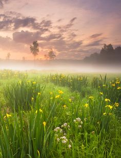 the morning mist on the meadow