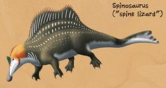 """Weird Backs Month #27 – SpinosaurusOne of the most recognizable names of all the """"sail-backed"""" animals, Spinosaurus was one of the largest of all known carnivorous dinosaurs, reaching lengths of at least 15m (49′2″). It lived during the mid-Cretaceous of Africa (~112-97 mya), and fossils are recorded from Algeria, Cameroon, Egypt, Kenya, Morocco, Niger, and Tunisia – although most are small fragments of skull bones or isolated teeth. (Teeth in particular are surprisingly common, ..."""