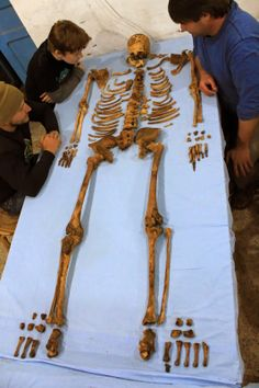 The skeleton of the previously unknown pharaoh Woseribre Senebkay lays on a table. The king's body was originally mummified, but robbers ripped the body apart. Surrounding the skeleton (from left to right) are Matt Olson, Graduate Student, NELC Department, University of Pennsylvania; Alexander Wegner; and Paul Verhelst, Graduate Student, NELC Department, University of Pennsylvania [Credit: Jennifer Wegner/Penn Museum]