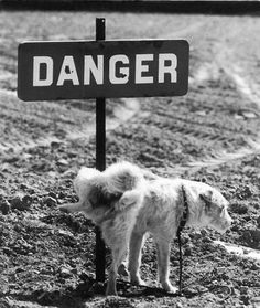 pissing on danger