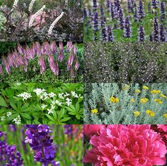 De mooiste borderplanten en -combinaties | MijnTuin.org Lavandula Angustifolia, Ecology, Astilbe, Patio, Plants, Inspiration, Gardens, Lawn And Garden, Biblical Inspiration