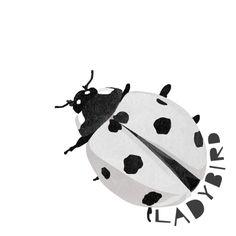 L is for Ladybird #animalart