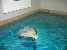epoxidharz 3d delfin bodenbelag badezimmer
