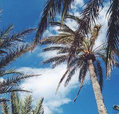 palm life // elle mer // follow us on instagram @ellemerswim x