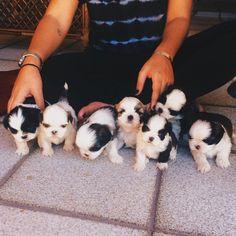 pups | via Tumblr ☻ ☻ ☺ ☂