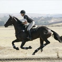 Cross country gallop, best feeling :) - Eventing  www.goldenrabbitsaddlery.com