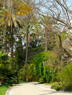 1000 images about antibes on pinterest french riviera for Jardin villa thuret antibes