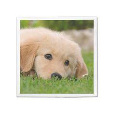 #Golden Retriever Cute Puppy Dreams Dog Head Photo Paper Napkin - #golden #retriever #puppy #retrievers #dog #dogs #pet #pets #goldenretriever