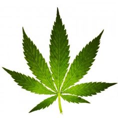 Cause and effect relationship between schizophrenia marijuanna use - very complex.