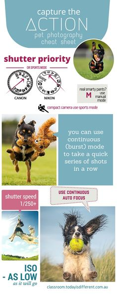 how to photograph dogs in action