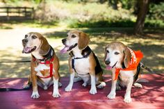 Baxter, Rousseau and Sally Freedom and Beyond Series Karen Lifshey/LittleLif Photography Sally, Freedom, Photography, Animals, Liberty, Political Freedom, Photograph, Animaux, Photography Business