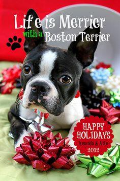 Arlo Christmas Card   Flickr - Photo Sharing!