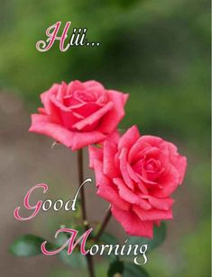 Good Morning Imeges, Good Morning God Quotes, Good Morning Roses, Good Morning Cards, Morning Thoughts, Happy Morning, Good Morning Picture, Good Morning Friends, Good Morning Greetings