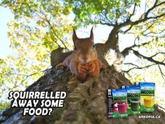Online shopping from a great selection at Arkopia Store. Canada Food Guide, Freeze Dried Fruit, Power Smoothie, Food Security, Freeze Drying, Camping Meals, Winter Is Coming, Fruit Smoothies, Emergency Preparedness