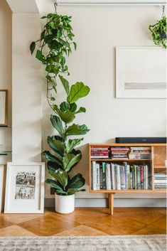 Fiddle-leaf Fig and Pothos Houseplants /// Gorgeous Indoor Plants That Will Liven Up Your Home /// By Design Fixation #plants #houseplants #homedecor #greenliving Boho Living Room, Living Room Decor, Home Design, Diy Design, Flat Interior Design, Interior Design Plants, Vintage Interior Design, Interior Colors, Interior Modern