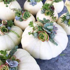 gorgeous pumpkin succulent arrangements via Tanya Slye @tcslye