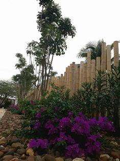 Tropischer Garten Von Ecoexteriores
