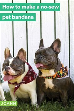 Want to win for cutest canine? Make some super simple no-sew pet banadanas to dress up your furry friend! Easy Diy Projects, Sewing Projects, Craft Projects, Craft Ideas, Creative Skills, Super Simple, French Bulldog, Pup, Crafty