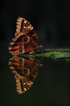 Reflection of a butterfly!