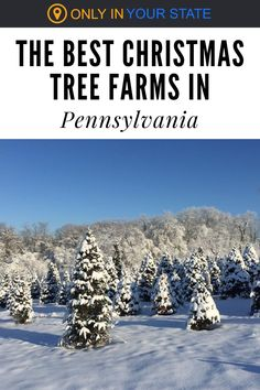 Get your holiday decorations at the best Christmas tree farms in Pennsylvania! Christmas Light Displays, Cool Christmas Trees, Magical Christmas, All Things Christmas, Beautiful Christmas, Christmas Lights, Farm Plans, Horse Drawn Wagon, Pleasant Valley