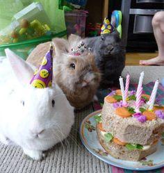 Bunny Birthday!!!