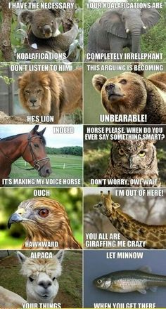 Ha perfect zoo puns