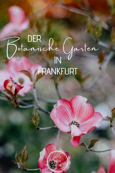 Botanischer Garten Frankfurt - Rhein-Main-Blog Maine, Rhein Main Gebiet, Posts, Blog, Inspiration, Nature Activities, Interactive Map, Baby Sister, Wiesbaden