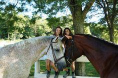 Cuties Horses, Animals, Animales, Animaux, Horse, Words, Animal, Animais
