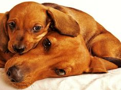4 Dog Puppy Dachshund Dogs Puppies Greeting Notecards/ Envelopes Set. $6.99, via Etsy.