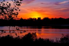 RingneckPond | Flickr - Photo Sharing!