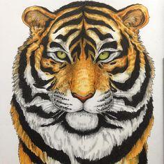 #imagimorphia #kerbyrosanes #adultcoloringbook #tiger